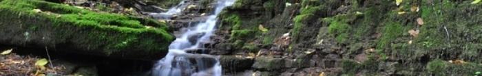 Село Скоморохи розташоване над річкою Стрипа за 18 км. від м. Бучач. Тут проживає 1199 осіб, займаючи територію 2.782 км. кв. Сюди їздять рейсові автобуси від районного центру.  Перша писемна згадка про Скоморохи датується 1439 р. У I половині 20 ст. ді�. Фото  2