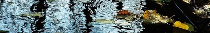 Славутич – місто обласного підпорядкування у Київській області України, розташоване на лівому березі Дніпра, одне з наймолодших міст України. Назва міста пішла від давньослов'янської назви Дніпра. Розташоване за 120 км від Києва. Місто зай. Фото  1