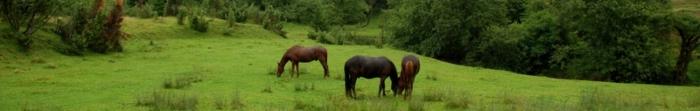 Турка – районний центр однойменного району Львівської області, неофіційна столиця Бойківщини. За найвірогіднішою версією назву місто одержало від первісних диких биків — турів, які водилися в навколишніх лісах. Назва міста не має нічого. Фото  1