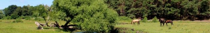 """Древнє місто Малин на річці Ірша названо на честь ватага древлян князя Мала, було одним із центрів легендарної Древляні. Населення становить близько 25 тис. осіб. Найвизначніші принади міста: - єдина в Україні """"Банкнотка"""" - підприємство, д. Фото  1"""