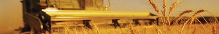 Городенка – районний центр Івано-Франківської області.  Перша писемна згадка про місто датується 1195 роком. 1668 року місто отримало Магдебурзьке право. Чисельність населення становить близько 12 тис. мешканців. Через місто протікає річка Ямг�. Фото  1